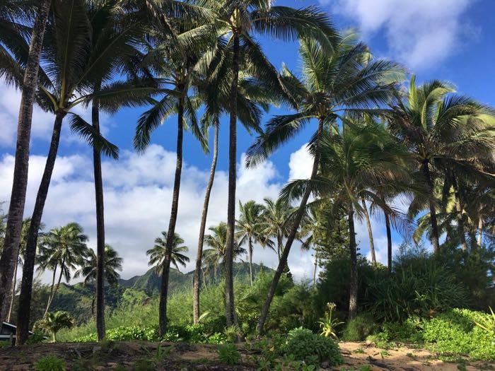 Kauai Plant Based Paradise