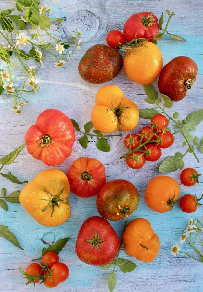 Heirloom Tomatoes for Panzanella Salad