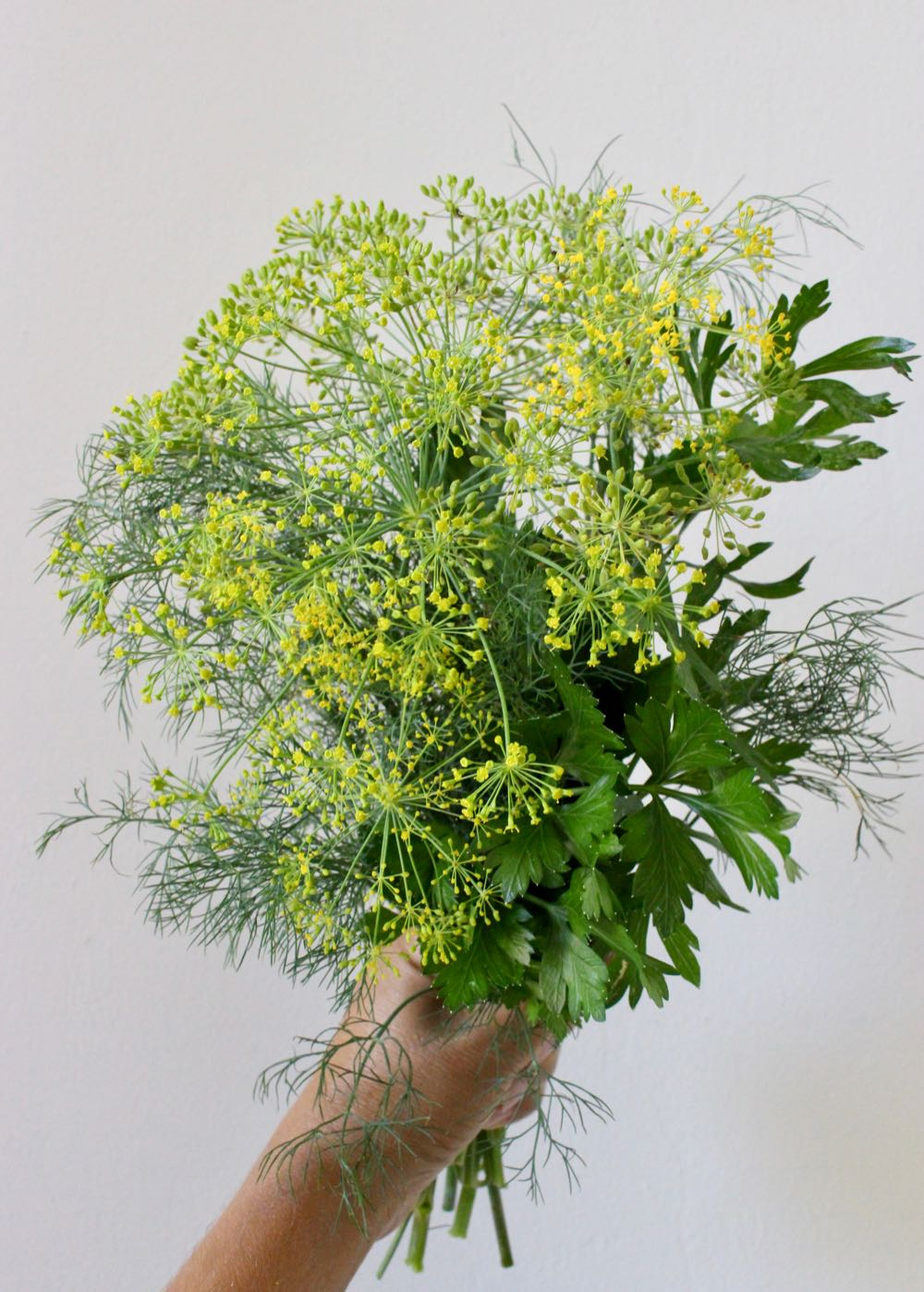 Fresh Dill and Parsley Bouquet