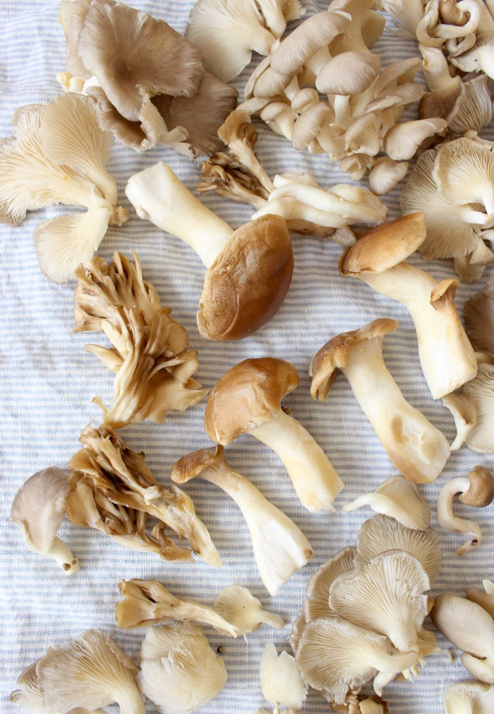 Wild Mushrooms for Risotto